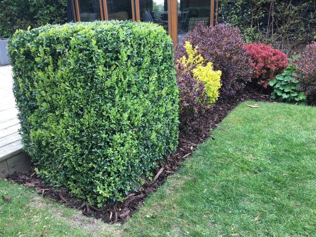 hedge borders